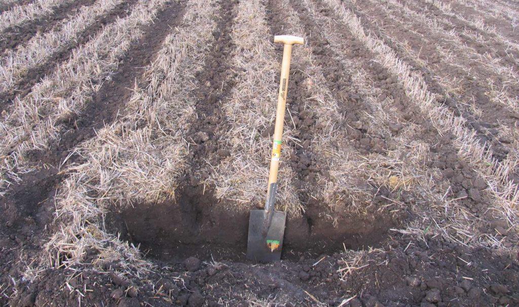 Strip-till soil identification at the ICC, Bernburg (Source: Siv Biada, DLG)