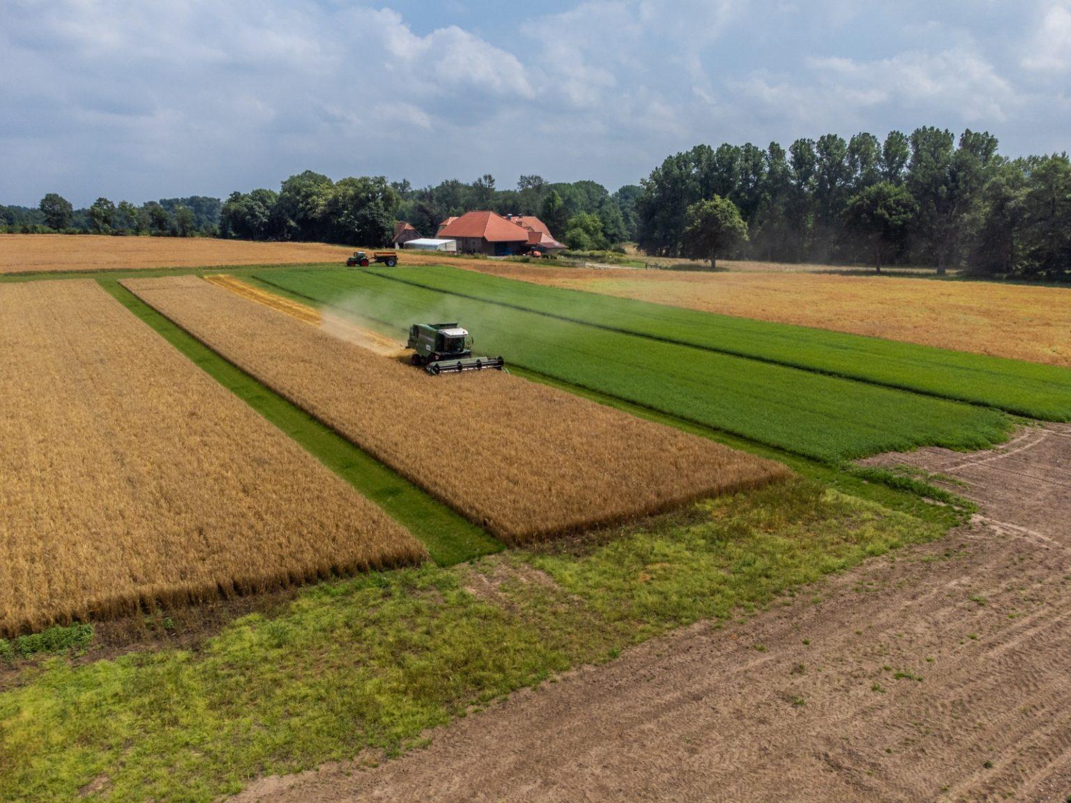 Harvest at Wambergen